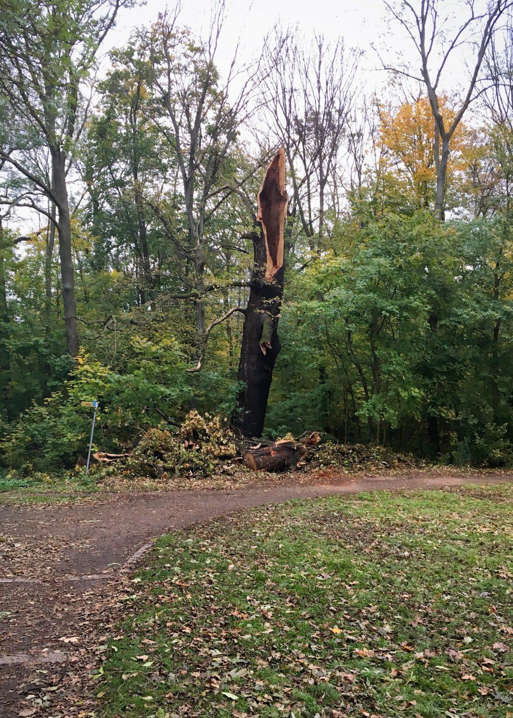 Viele Bäume im Rosental wurden von Herwert getroffen; Foto: M. Geißler