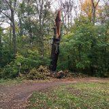 Sturmschäden – LVZ berichtet über Schäden auch im Rosental