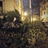 Aus aktuellem Anlass – Weihnachtsbaumentsorgung