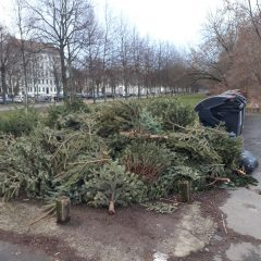Wohin mit dem Weihnachtsbaum? Eine Anregung!