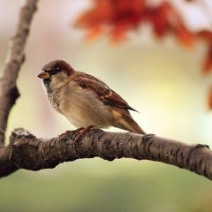 Vogelkundliche Wanderungen erst wieder im Mai